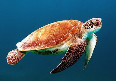 23 May - World Turtle Day